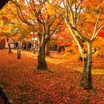 京都に紅葉と人