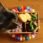 高菜と豚肉炒め弁当