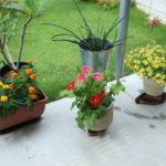 梅雨の合間の庭日記